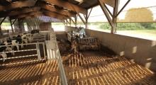 Телескопический погрузчик для сельского хозяйства Bobcat TL30.60+AGRI ровняет